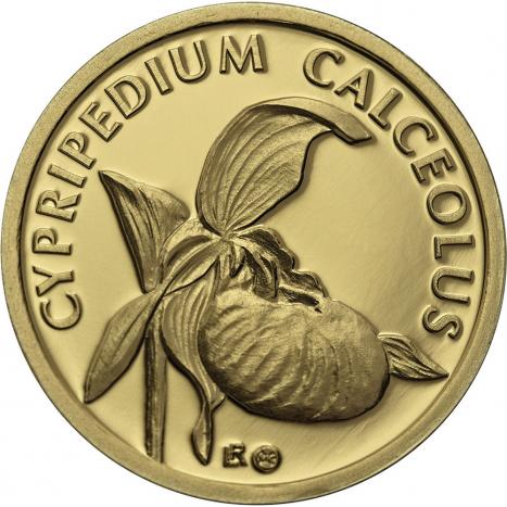 Fauna and flora in Slovakia-Cypripedium calceolus